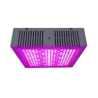 Quality Osunby 600W Cannabis LED Grow Light Full Spectrum for Indoor Greenhouse Plants Veg Bloom Flowering wholesale