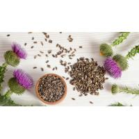 Buy cheap milk thistle in liver health products milk thistle in crude medicine milk thistle seed extract from Wholesalers