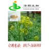 Buy cheap Radix isatidis P.E from Wholesalers