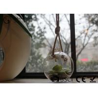 Buy cheap Clear Glass Hanging Terrarium / Hanging Glass Plant Holders Anti Corrosion from Wholesalers