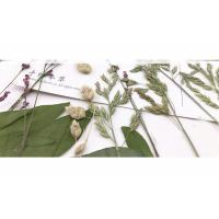 Buy cheap Original Wild Grass Weed Large Pressed Flowers For Aroma Wax Candles from Wholesalers