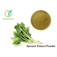 Buy cheap Spinacia Oleracea L Dehydrated Organic Spinach Powder For Weight Loss from wholesalers