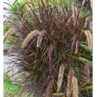 Buy cheap Artificial Turf for Landscaping and Pets from Wholesalers