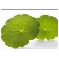 Buy cheap Skin Scars Anti-aging Gotu Kola Leaf, Centella Asiatica Extract for Cosmetic industry from Wholesalers