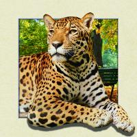 Buy cheap 5d Animal Collage Poster Of 15.7x15.7 Inches Custom Lenticular Printing For Gift. from wholesalers