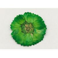 Buy cheap Dye Green Dried Flowers , Dried Daisy Flowers For Epoxy Recycled Flowers from Wholesalers