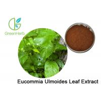 Buy cheap 98% Chlorogenic Acid Eucommia Ulmoides Leaf Extract With Anti - Tumor Effect from Wholesalers