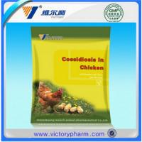 Chicken coccidiosis scattered