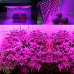 Buy cheap 1000 Watt RED Led Grow Lamp For Cannabis And Marijuana , Aluminum Body from Wholesalers