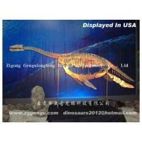 Quality Pliosaurus skeleton wholesale