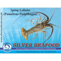 Buy cheap M/S Silver Seafood from Wholesalers