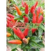 Buy cheap Watch Fruit vegetables from Wholesalers