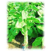 Buy cheap Other Leafy Vegetables from Wholesalers
