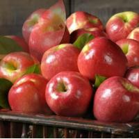 Buy cheap PINK LADY APPLES NO.30 deliver gift hamper to shenzhen from Wholesalers