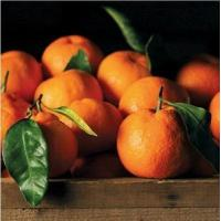 Buy cheap SATSUMA MANDARINS NO.34 deliver gift hamper to shenzhen from Wholesalers