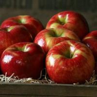 Buy cheap HONEYCRISP APPLES NO.32 deliver gift hamper to shenzhen from Wholesalers