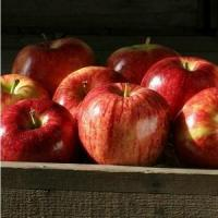 Buy cheap GALA APPLES NO.31 deliver gift hamper to shenzhen from Wholesalers