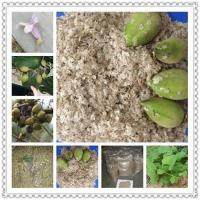 Buy cheap Kiri seeds with phyto certificate from Wholesalers