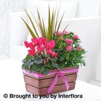 Happy Birthday Rosy Pink Autumn Planter with 125g Maison Fougere Chocolates