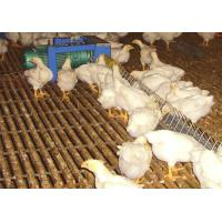 Buy cheap Breeder feed line system from Wholesalers