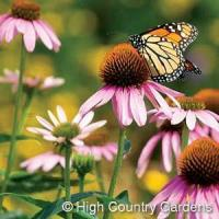 Buy cheap 1 OZ. Butterfly and Bird Wildflower Seed Mix from Wholesalers