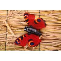 Buy cheap Solar Butterfly from Wholesalers