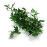 niceEshop(TM) 6 Ft Silk English Ivy Garland Wedding Artificial-Green